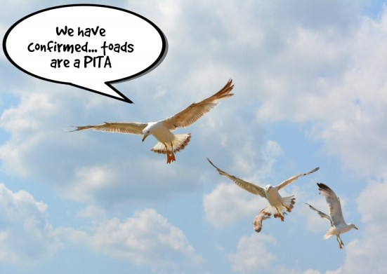 birds final