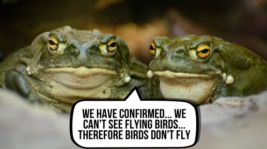 toads-fly2